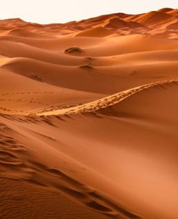 Convocatoria Deserta